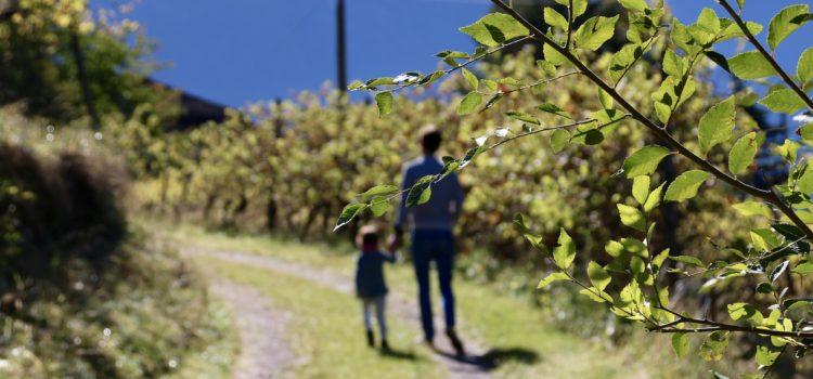 Homeschooling:  Spunti per chi è in cammino