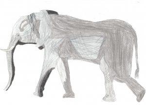 ritratto di un elefante