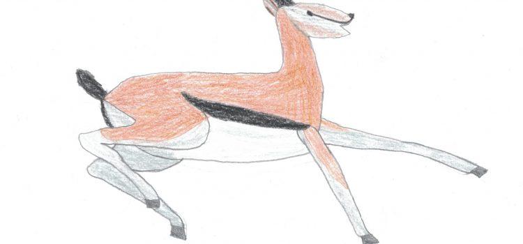 gazzella di thomson immagine