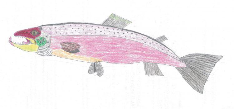 ritratto di salmone