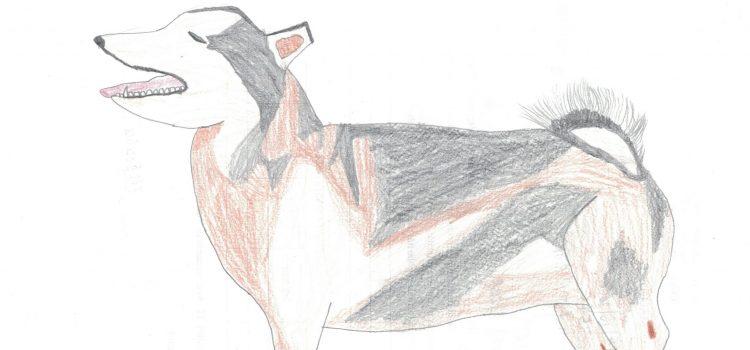 immagine di husky siberiano