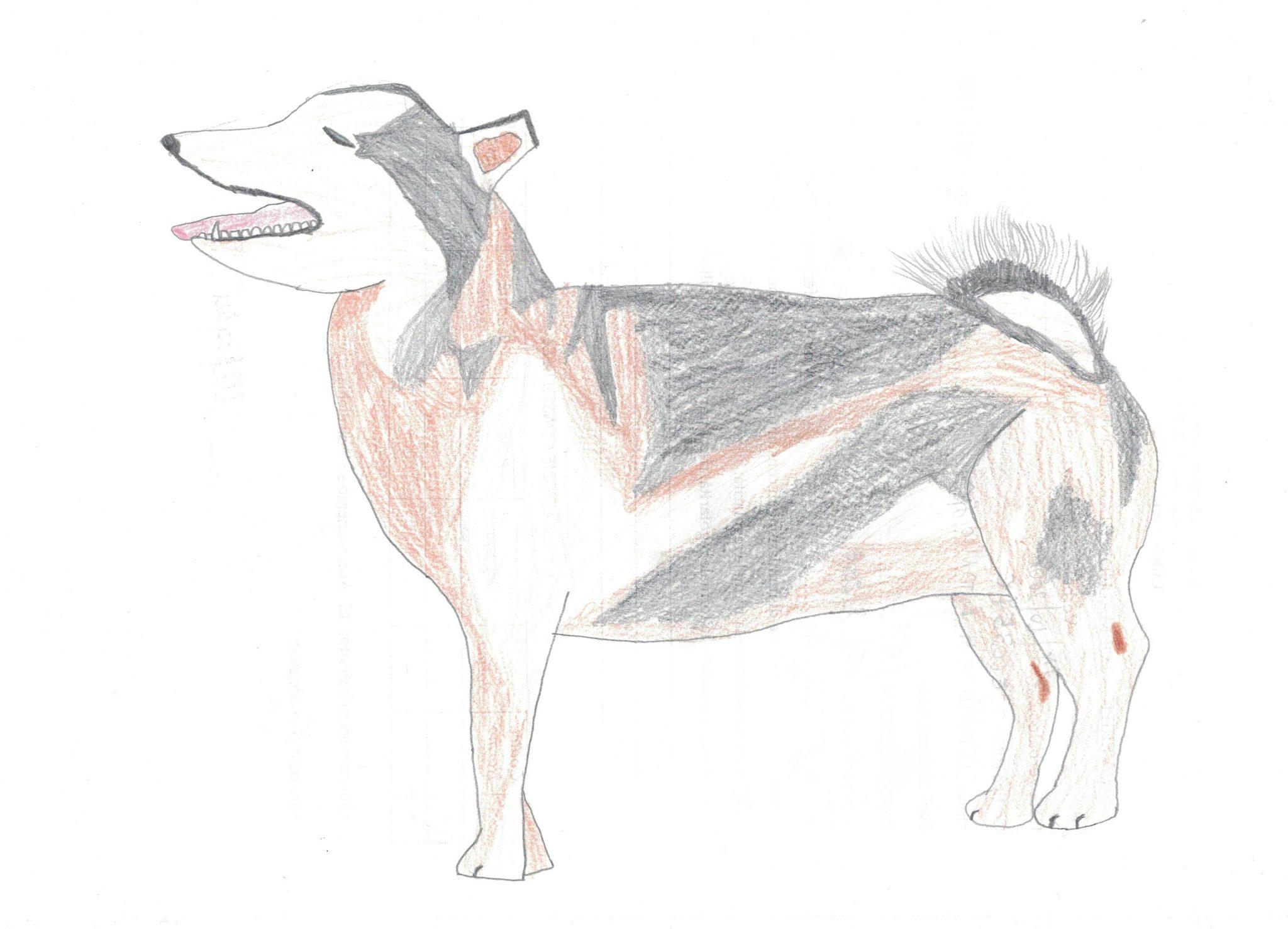 L'husky siberiano