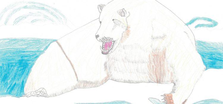 immagine di orso polare
